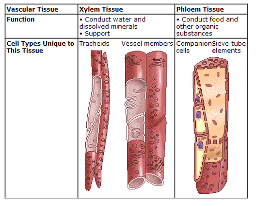 Picture